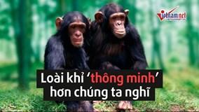 Loài khỉ thông minh hơn những gì chúng ta nghĩ