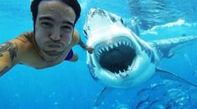 Selfie bên cá mập và loạt trào lưu không phải ai cũng dám thử