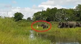 """Cá sấu tấn công voi, bị cả đàn lao vào """"đánh hội đồng"""""""