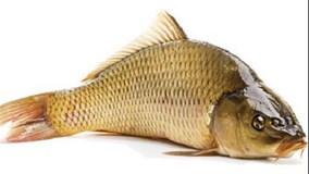 Bí kíp giữ cá tươi lâu trong điều kiện không có tủ lạnh