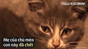 Mèo con 'hiếu thảo' chỉ ăn sỏi đá dành thịt cá cho mèo mẹ đã chết