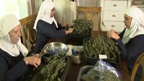 Gặp gỡ các bà sơ tự trồng cần sa chữa bệnh cho người nghèo