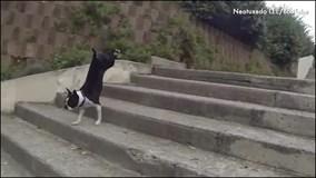 """Những cách leo cầu thang """"siêu lầy"""" của chó cưng"""