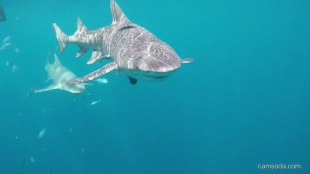 Loài cá mập đã tấn công Molly