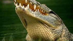 Cô bé dũng cảm tự cạy miệng cá sấu để thoát thân