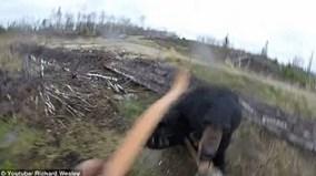 Thót tim nhìn cảnh thợ săn bị gấu tấn công bất ngờ
