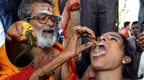 Ấn Độ: Nuốt cá sống - cách chữa bệnh suyễn kỳ quặc mà hiệu quả