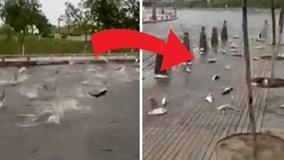 Hàng trăm con cá nhảy lên bờ tự tử hàng loạt