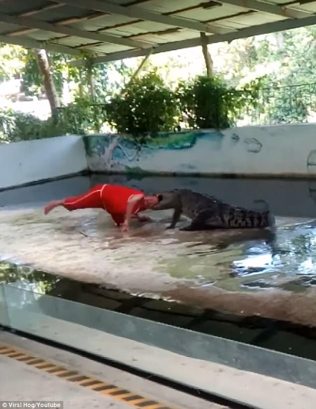 Khoảnh khắc con cá sấu ngoạm đầu diễn viên xiếc (Ảnh: Youtube)
