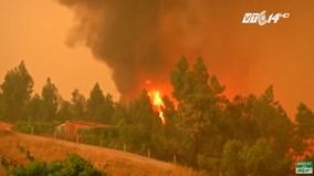 Cháy rừng ở Bồ Đào Nha: Ít nhất 62 người chết