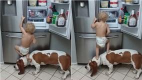 Clip cậu bé tập đi cùng chó cưng 'công phá' tủ lạnh gây sốt mạng xã hội