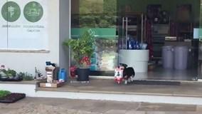 Chú chó nhỏ đáng yêu tự đi siêu thị mua đồ túi lớn đồ ăn mỗi ngày