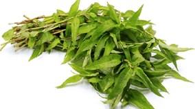Vì sao người Việt Nam thích ăn rau răm?