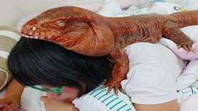 Chú thằn lằn khổng lồ nổi tiếng nhất trên Instagram