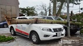 Bão vào Nghệ An - Hà Tĩnh, cây đổ, nhiều nhà tốc mái