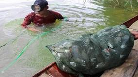Theo chân thợ lặn bắt đặc sản vẹm xanh ở đáy sông