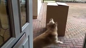 Nhận món quà trong chiếc hộp bí mật, chú chó cuống cả chân vì quá bất ngờ