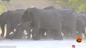 Đàn voi cố gắng giải cứu chú voi con bị thương do xe chạy ẩu đâm phải
