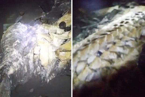 Video: Đi dạo quanh bãi biển ban đêm, phát hiện xác sinh vật kỳ lạ - 2