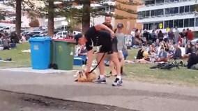 Mặc kệ chủ dỗ dành, chú chó nhất định không chịu rời công viên
