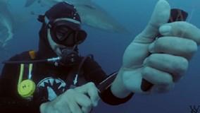 Thợ lặn Mỹ cắt tay trước đàn cá mập xem có bị xé xác