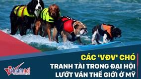 Những chú chó lướt ván siêu đẳng tranh tài ở Mỹ