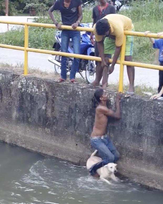 Chàng trai quên mình cứu chú chó đang chới với giữa dòng nước khiến nhiều người xúc động - Ảnh 2.