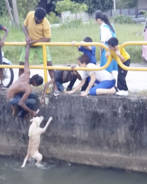 Chàng trai quên mình cứu chú chó đang chới với giữa dòng nước khiến nhiều người xúc động - Ảnh 3.