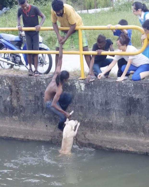 Chàng trai quên mình cứu chú chó đang chới với giữa dòng nước khiến nhiều người xúc động - Ảnh 4.
