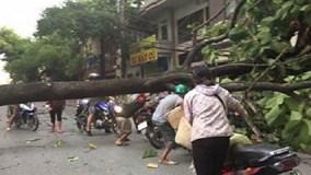 Hoàn lưu bão số 6 gây dông lốc, quật gãy cây xanh ở Lào Cai