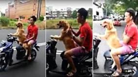 """Chú chó chở chủ đi chơi bằng xe máy """"gây sốt"""" ở Thái Lan"""