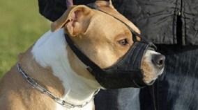 Từ tháng 9: không đeo rọ mõm cho chó bị phạt 800.000 đồng