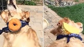 Chú chó hậu đậu nhất quả đất, chưa bao giờ bắt nổi đồ ăn
