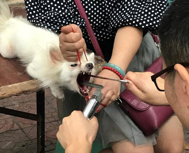 Gây mất trật tự, nhiều chú chó bị bác sĩ làng banh họng và cắt dây thanh quản giữa chợ - Ảnh 2.