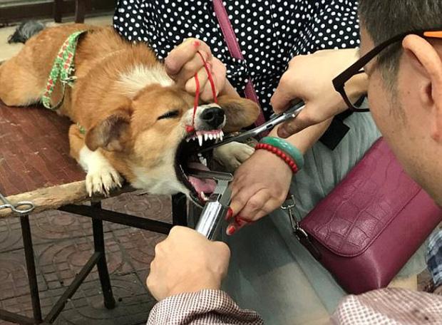 Gây mất trật tự, nhiều chú chó bị bác sĩ làng banh họng và cắt dây thanh quản giữa chợ - Ảnh 5.