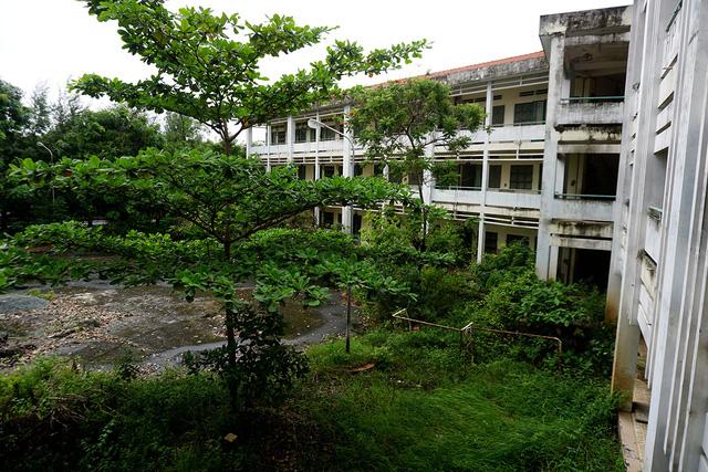 Cây cỏ mọc um tùm bên trong khuôn viên trường.