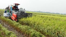 Tình trạng xã hội đen lộng hành vùng quê ở Hưng Yên