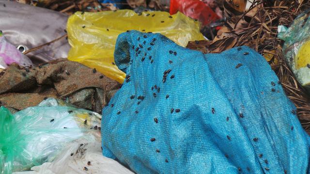 Cảnh ruồi nhặng bu kín bao tải rác đến ghê người.