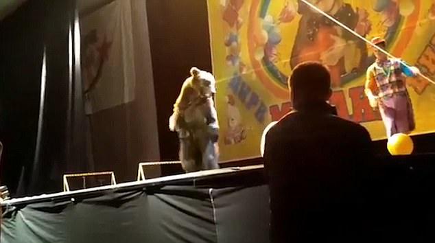 Việc sử dụng động vật hoang dã trong biểu diễn xiếc thú vẫn luôn tồn tại những nguy cơ tiềm ẩn.