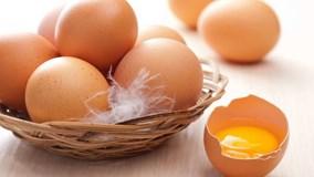Nhật Bản lai tạo thành công giống gà đẻ trứng hỗ trợ chữa bệnh