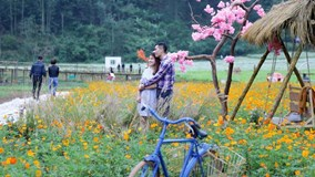 Dân phượt mê mẩn thung lũng hoa Bắc Sơn đẹp như cổ tích