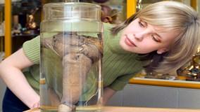 """Đỏ mặt khám phá bộ sưu tập """"cậu nhỏ"""" lớn nhất thế giới ở Iceland"""