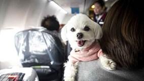 Chuyến bay dành cho cún cưng ở Nhật Bản