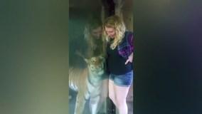 Phản ứng bất ngờ của hổ khi thấy cô gái mang thai