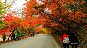 Thưởng thức cảnh đẹp thiên nhiên Hàn Quốc khi vào Thu