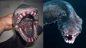 Chạm trán thủy quái thân dài như rắn, miệng tua tủa 300 răng nhọn
