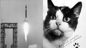 """Cô mèo đầu tiên sống sót trở về từ vũ trụ: bị mổ não phải """"chết nhân đạo"""""""