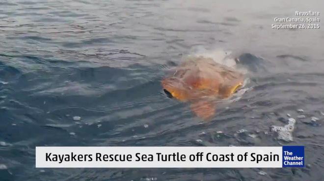 Phát hiện sinh vật lạ trên biển, hai người đàn ông bất ngờ nhảy xuống nước - Ảnh 1.
