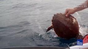 Phát hiện sinh vật lạ trên biển, hai người đàn ông bất ngờ nhảy xuống nước