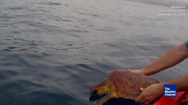 Phát hiện sinh vật lạ trên biển, hai người đàn ông bất ngờ nhảy xuống nước - Ảnh 4.